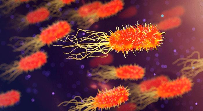 antibiótico cannabidiol