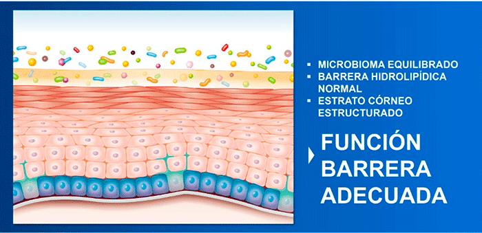 Microbioma Equilibrado