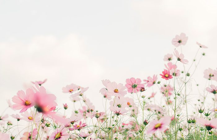 Perfumes Primavera Fragancias Femeninas