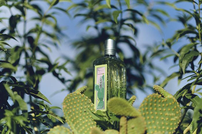 Eau de Toilette Verbena Cactus