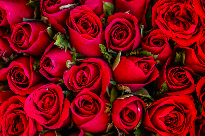 Rehabilitacion Olfatoria Rosas